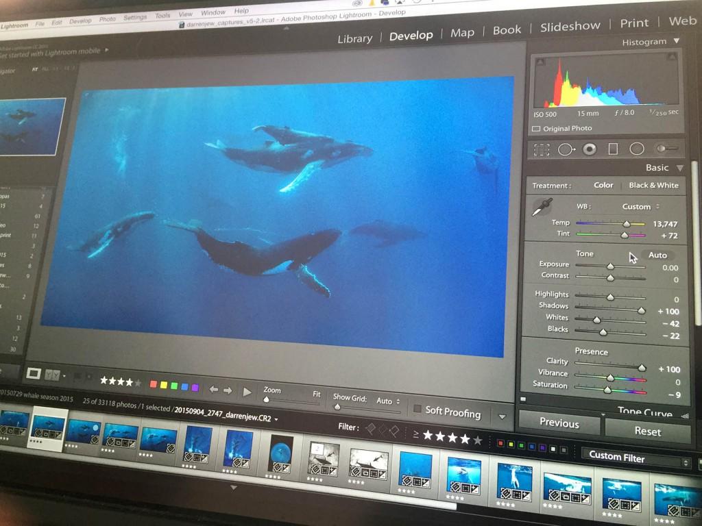 whales-underwater-darren-jew-lab-01a