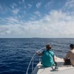 whales-underwater-darrenjew-remote-01