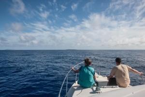 whales-underwater-darrenjew-remote-011