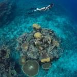 whales-underwater-darrenjew-snorkeling-03