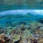 whales-underwater-darrenjew-snorkeling-04