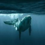 whales-underwater-rita-kluge-4