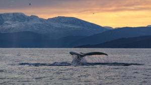 Whales under water 606167320