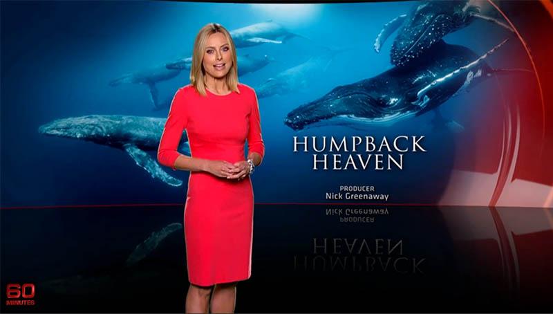 whales-underwater-darren-jew-60minutes-01