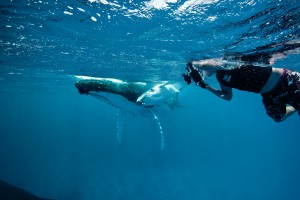 whales-underwater-darrenjew-photography-2