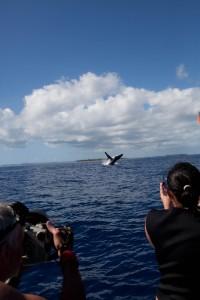 whales-underwater-darrenjew-photography-06