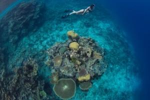 whales-underwater-darrenjew-snorkeling
